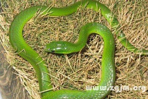 大奖娱乐平台绿蛇