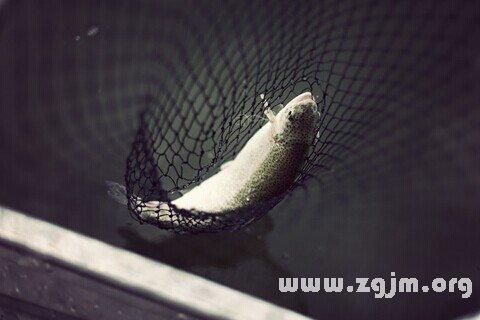 庄闲游戏鳟鱼
