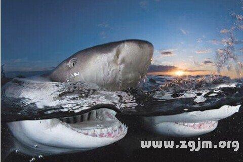 庄闲游戏鲨鱼