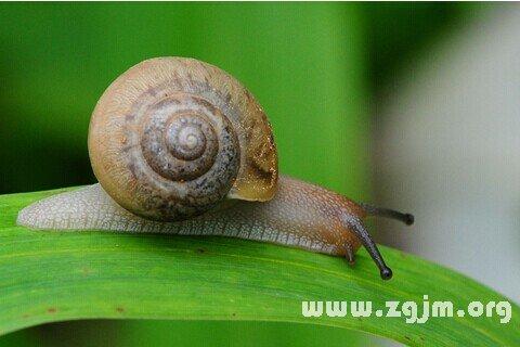 大奖娱乐平台蜗牛