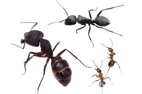 庄闲游戏蚂蚁