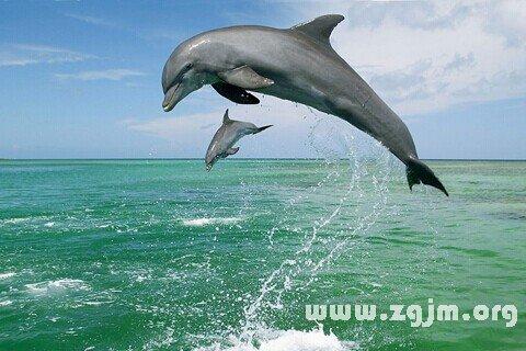 大奖娱乐平台海豚