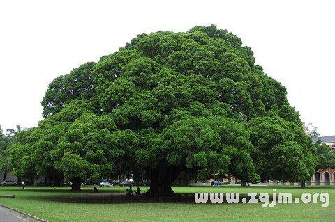 大奖娱乐平台树