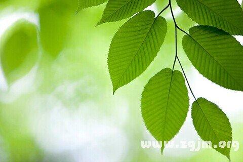 大奖娱乐平台绿叶