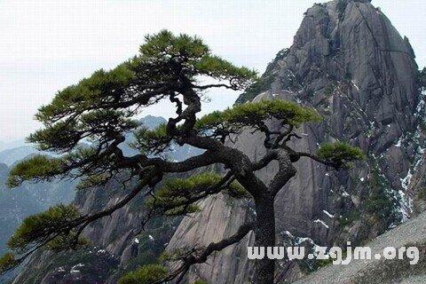 庄闲游戏松树