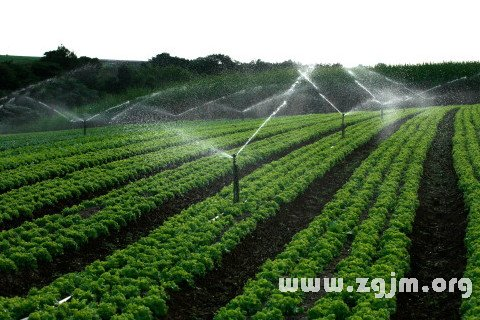 大奖娱乐平台灌溉