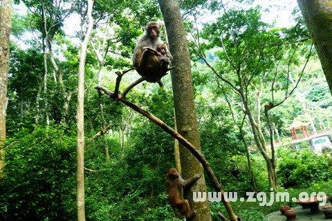 庄闲游戏爬树