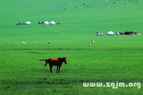庄闲游戏草原