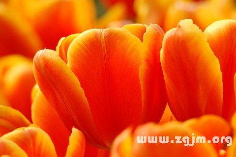 庄闲游戏橙色