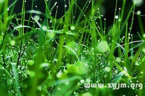 大奖娱乐平台绿色