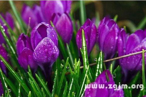 大奖娱乐平台紫色