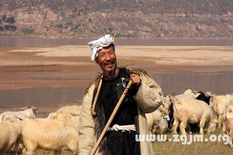 梦见牧羊人 放羊人