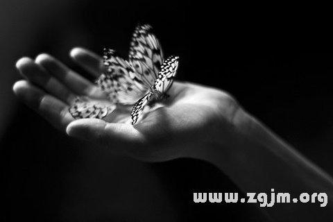 梦见蝴蝶死亡