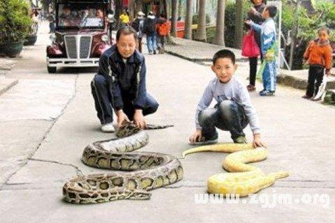梦见一对蛇 两条蛇