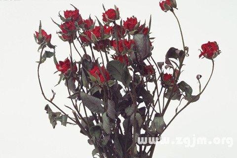 梦见枯萎的玫瑰花