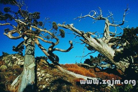 梦见树木枯萎