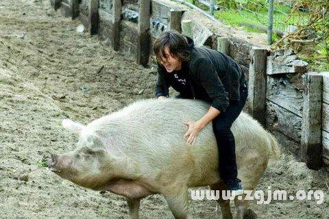 大奖娱乐平台骑在猪背上
