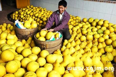 梦见买柚子