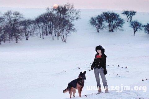 梦见在积雪的森林中漫步
