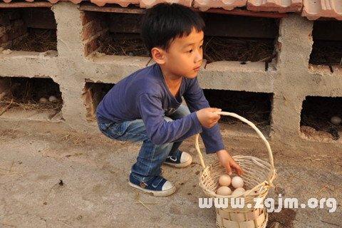 梦见捡到鸡蛋