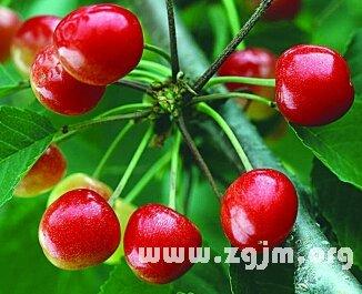 梦见吃红樱桃