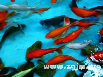梦见田里有鱼