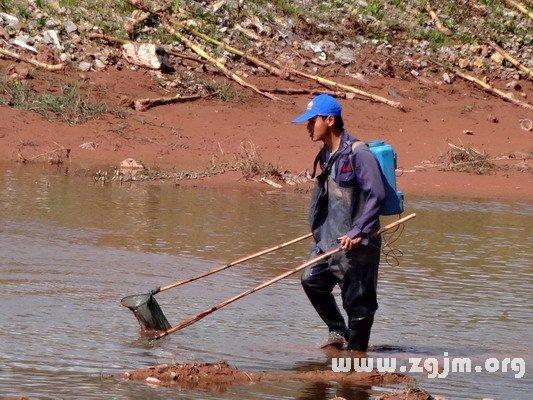 梦见渔网捕鱼
