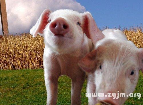 梦见和猪说话