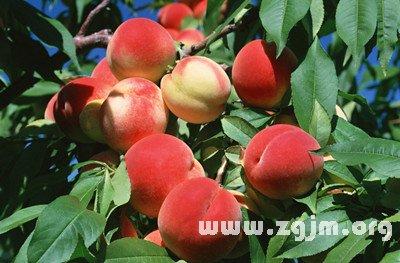 梦见卖桃子