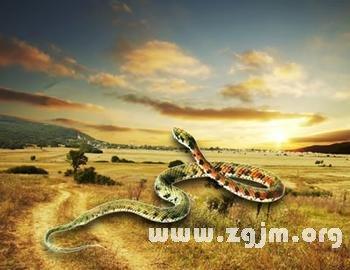 梦见蛇在床边