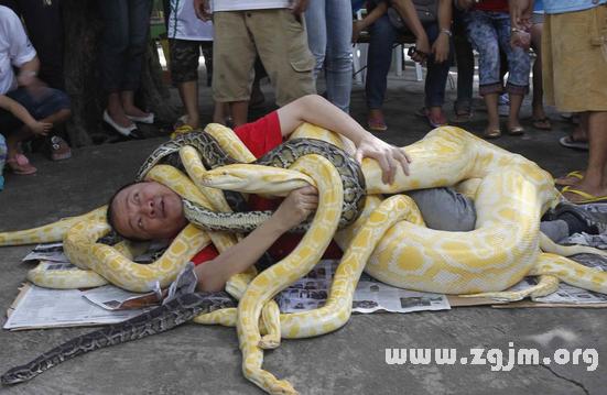 梦见黄蛇缠身