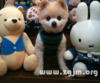 梦见玩具熊
