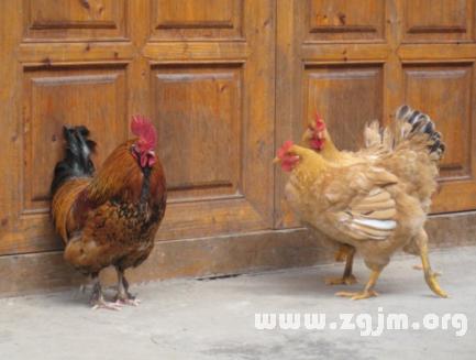 梦见三只鸡