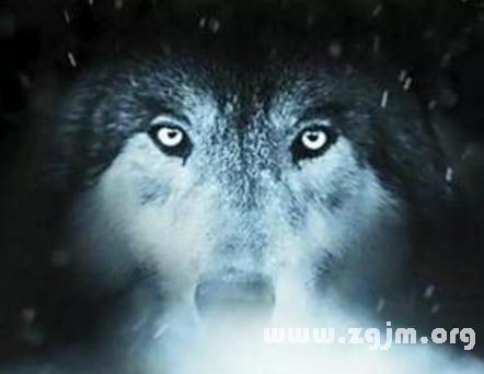 梦见狼变成人