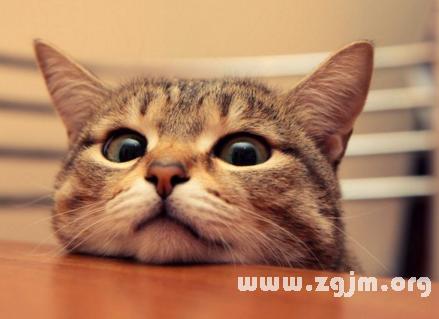 梦见猫病了