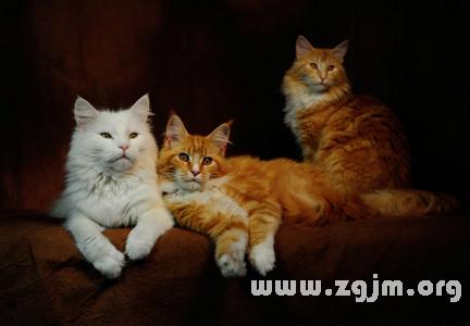 梦见三个猫