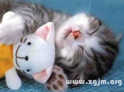 梦见猫入怀
