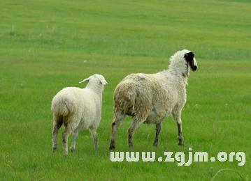 梦见两只羊