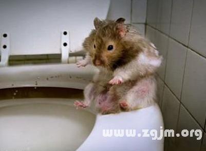 梦见老鼠成精