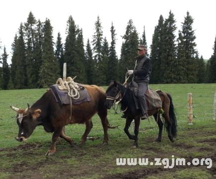 梦见牛和马