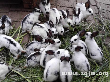 庄闲游戏好多兔子