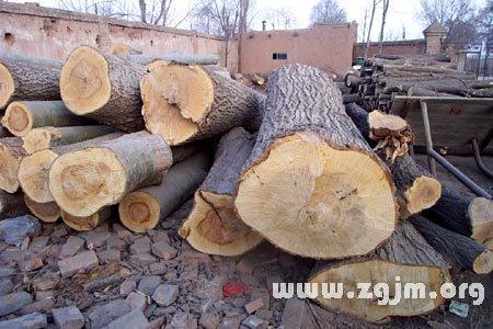 梦见大树被砍