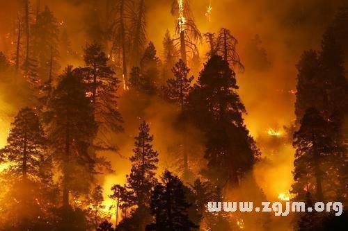 梦见森林大火