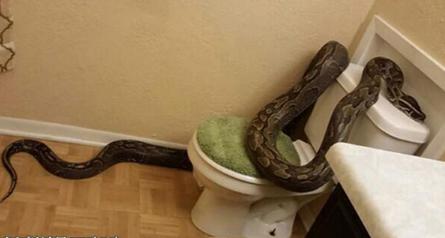 梦见家里有大蛇
