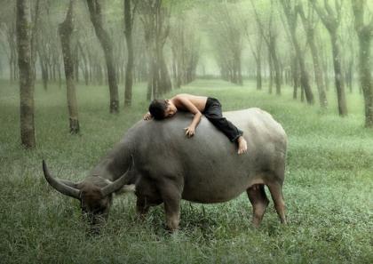 梦见骑在牛背上