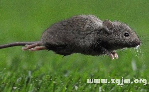 1972年属鼠的人2016年运程